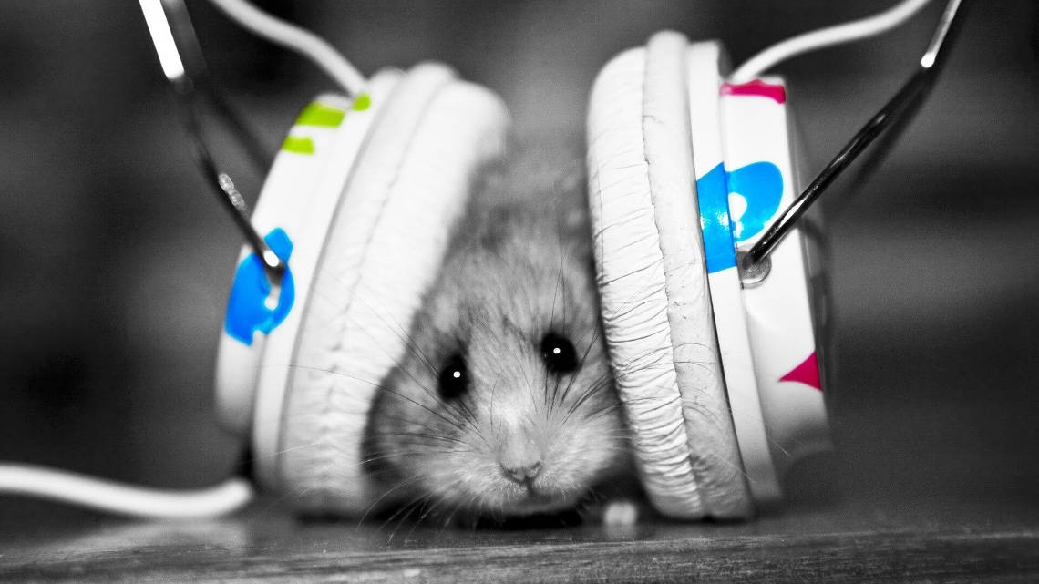 rodent with headphones on ears